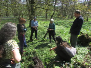 Foraging in the woods during the 2016 Scottish Wild Harvests Association gathering
