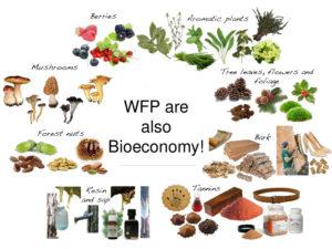 Wild forest products are also Bioeconomy! – Davide Pettenella