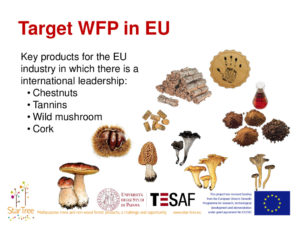Key products for the EU wild forest products industry - Davide Pettenella
