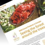Photo of StarTree non-wood forest products Policy Brief